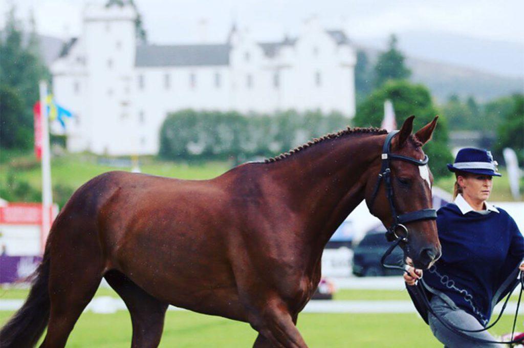 Tinderbox_Sport_Horses_4