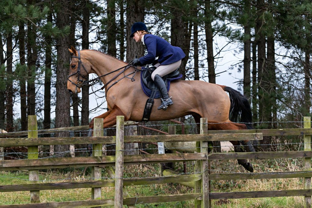 Tinderbox_Sport_Horses_8