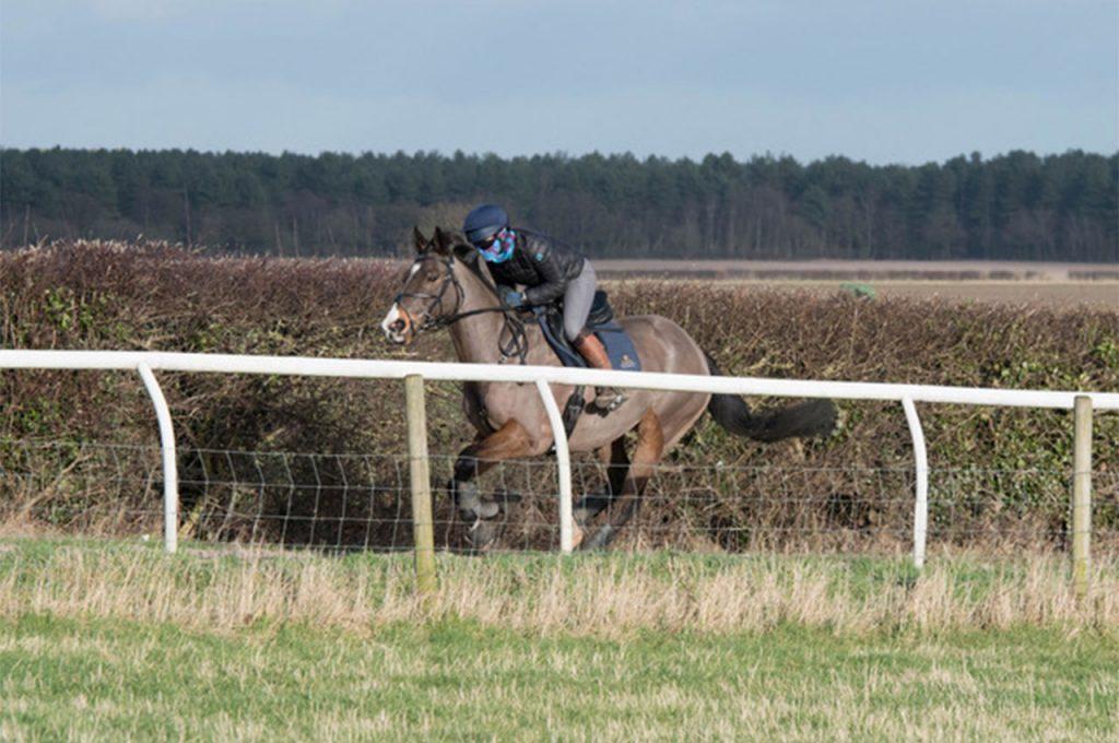 Artificial Surface Gallops Nottinghamshire