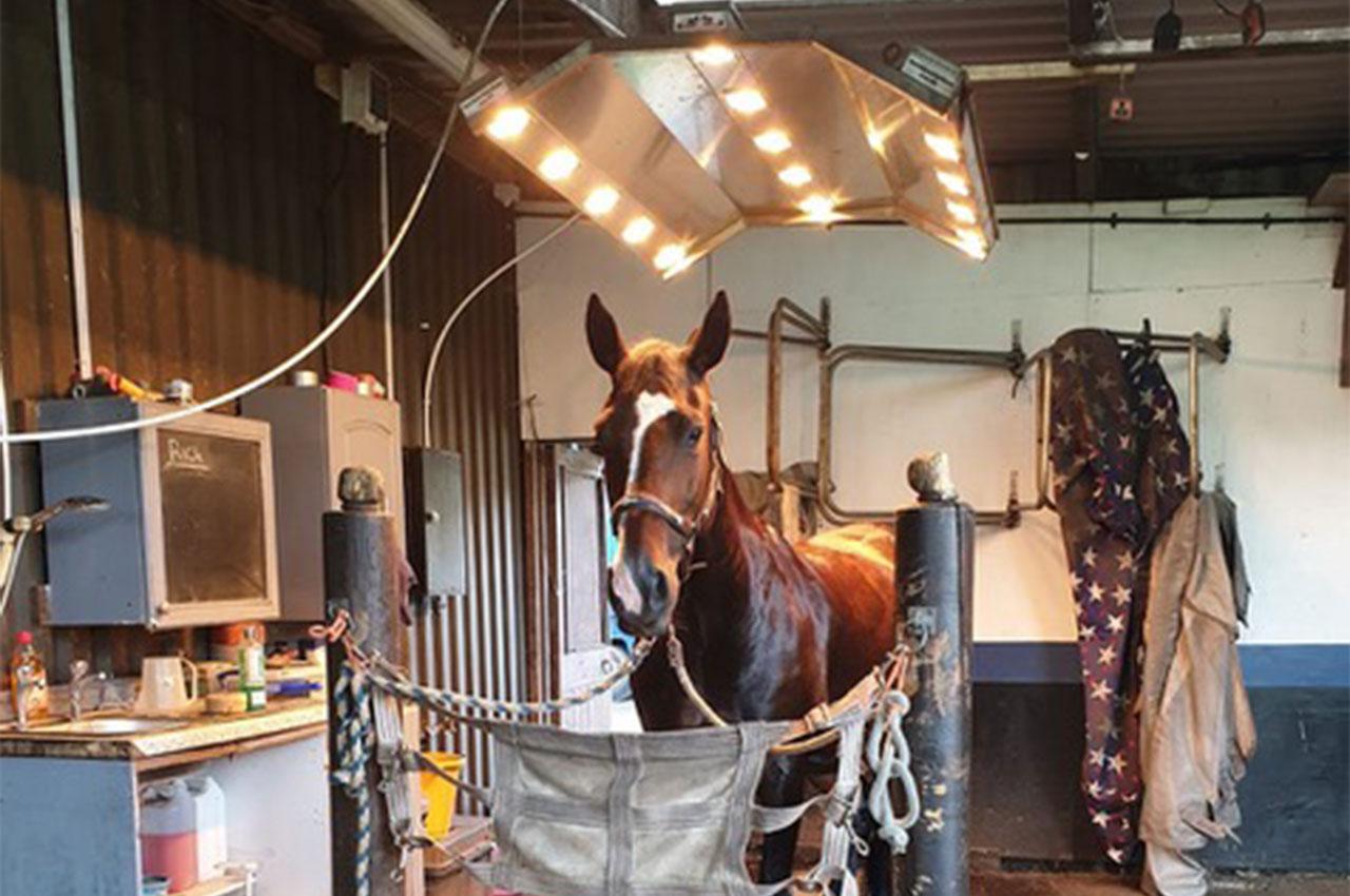 Horse Solarium Newark Nottinghamshire