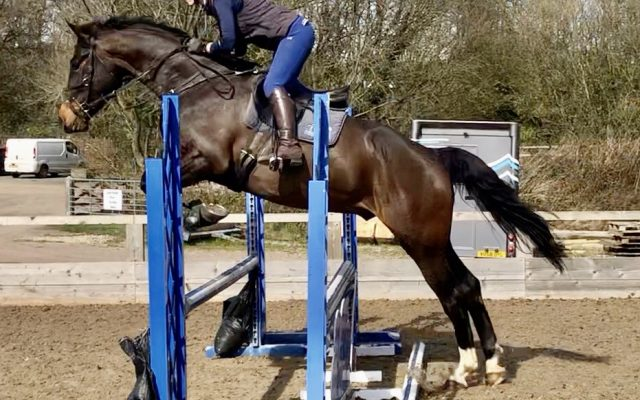 Young Event Horse For Sale_Casello