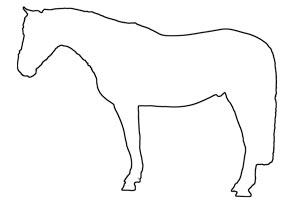 Tinderbox-Nottinghamshire-Horses-For-Sale